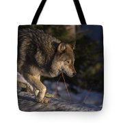 Early Light Tote Bag