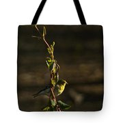 Early Morning For American Golden Finch Tote Bag