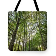 Early Morning In The Forest Tote Bag