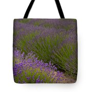 Early Morning Lavender Tote Bag