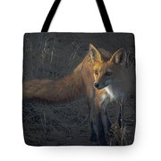 Early Morning Red Fox Prowl Tote Bag