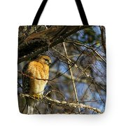 Early Morning Still Hunting  Coopers Hawk Art Tote Bag