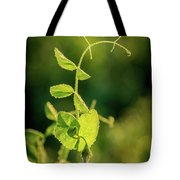 Early Morning Stretch Tote Bag