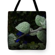 Early Morning Water Droplets Tote Bag