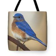 Eastern Blue Bird Male Tote Bag