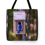 Eastern Bluebird Entering Home Tote Bag