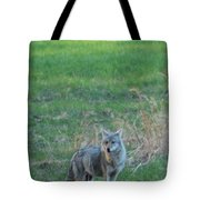 Eastern Coyote In Grass Tote Bag