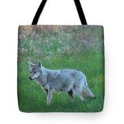 Eastern Coyote In Meadow   Tote Bag