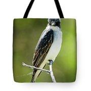 Eastern Kingbird Stare Tote Bag