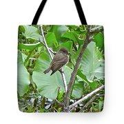 Eastern Phoebe - Sayornis Phoebe  Tote Bag