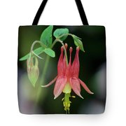 Eastern Red Columbine - D010104 Tote Bag