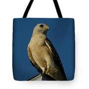 Eastern Red Shouldered Hawk Tote Bag by April Wietrecki Green
