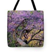 Eastern Redbud Arlington Virginia Spring Bloom Tote Bag