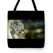 Eastern Screech Owl-6950 Tote Bag