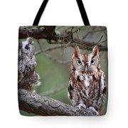 Eastern Screech Owls 424 Tote Bag