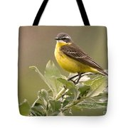 Eastern Yellow Wagtail Tote Bag