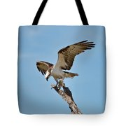 Eating Osprey-1 Tote Bag by Rudy Umans