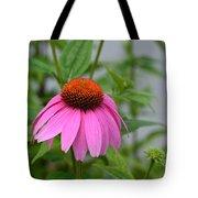 Echinacea 16-01 Tote Bag