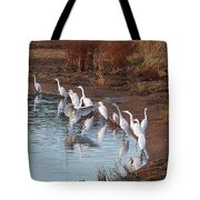 Egrets Gathering For Fishing Contest. Tote Bag