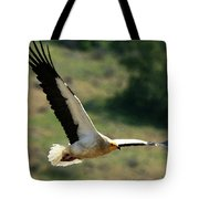 Egyptain Vulture In Flight  Tote Bag