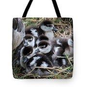 Egyptian Goose Alopochen Aegyptiacus Tote Bag