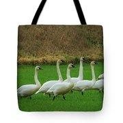 Eight Beautiful Swans Tote Bag