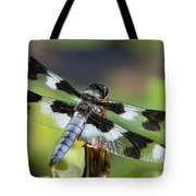 Eight-spotted Skimmer  Tote Bag
