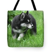Eight Week Old Alusky Puppy On A Summer Day Tote Bag