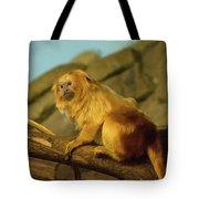 El Paso Zoo - Golden Lion Tamarin Tote Bag by Allen Sheffield