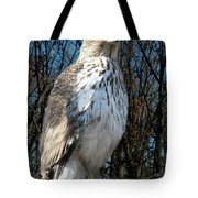 Elder Hawk Tote Bag