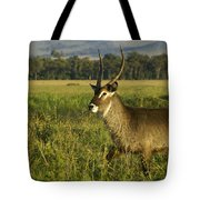 Elegant Guy Tote Bag
