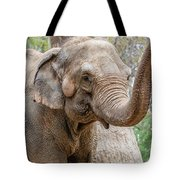 Elephant And Tree Trunk Tote Bag