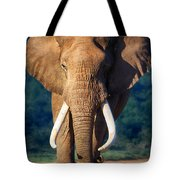 Elephant Approaching Tote Bag