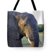 Elephant Close Up Tote Bag