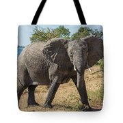 Elephant Crossing Dirt Track Facing Towards Camera Tote Bag