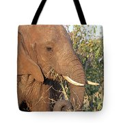 Elephant - Curled Trunk Tote Bag