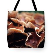 Elephant Ear Mushroom Family Tote Bag