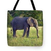 Elephant Feeding Tote Bag