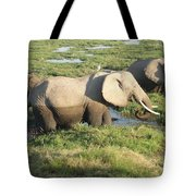 Elephant Mother And Calves Tote Bag