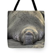 Elephant Seal 3 Tote Bag
