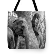 Elephant Tree Black And White  Tote Bag