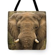 Elephant Watching Tote Bag