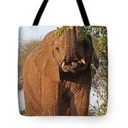 Elephant's Supper Time Tote Bag