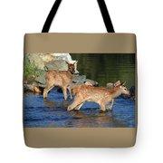 Elk Calf Crossing River 1 Tote Bag