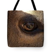 Elk Eye Close Up Tote Bag