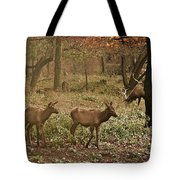 Elk In The Early Morning Tote Bag