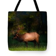 Elk In The Smokies. Tote Bag by Itai Minovitz