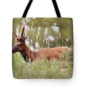 Elk Of Jasper... Tote Bag