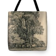 Elm Trees In Old Hall Park Tote Bag by John Constable
