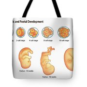 Embryonic And Foetal Development Tote Bag
